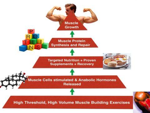 اتفاقاتی که بر سر عضلات شما اتفاق می افتد - گروه تخصصی منتال پاور بادی بیلدینگ - پادکست