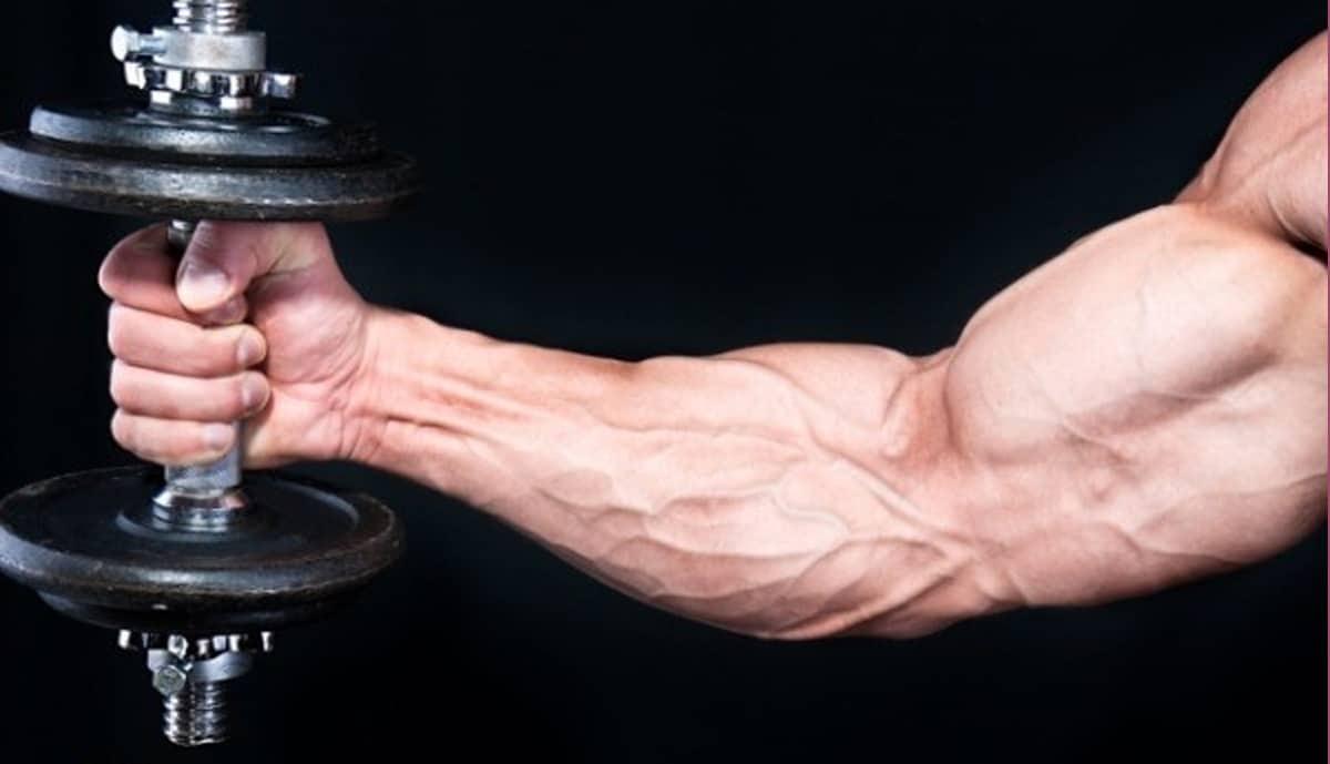 ارتباط ورزش با اختلال در غدد درون ریز - داروشناسی - گروه تخصصی منتال پاور بادی بیلدینگ
