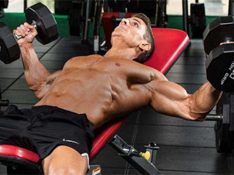 توسعه عضلات فوقانی سینه یا بالای سینه - کتابخانه حرکات