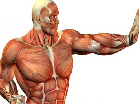 الفبای نگهداری عضلات - رژیم های غذایی - تغذیه ورزشی