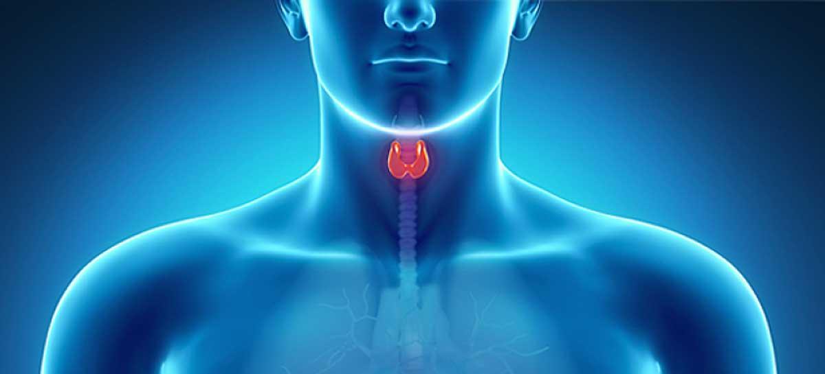 چربی سوزها - چربی سوز ترموژنیک - مکمل های غذایی - غده تیروئید