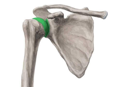 شانه یک مفصل منحصر به فرد - ورزش درمانی - گروه تخصصی منتال پارو بادی بیلدینگ